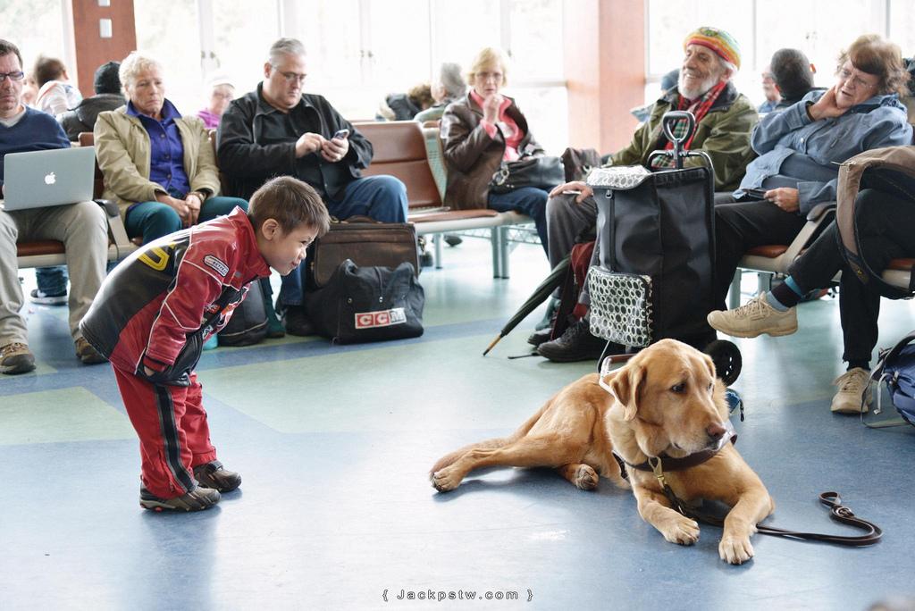 小男孩與導盲犬