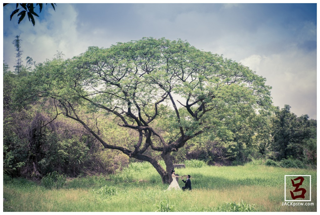 個人很喜觀這個大樹的感覺